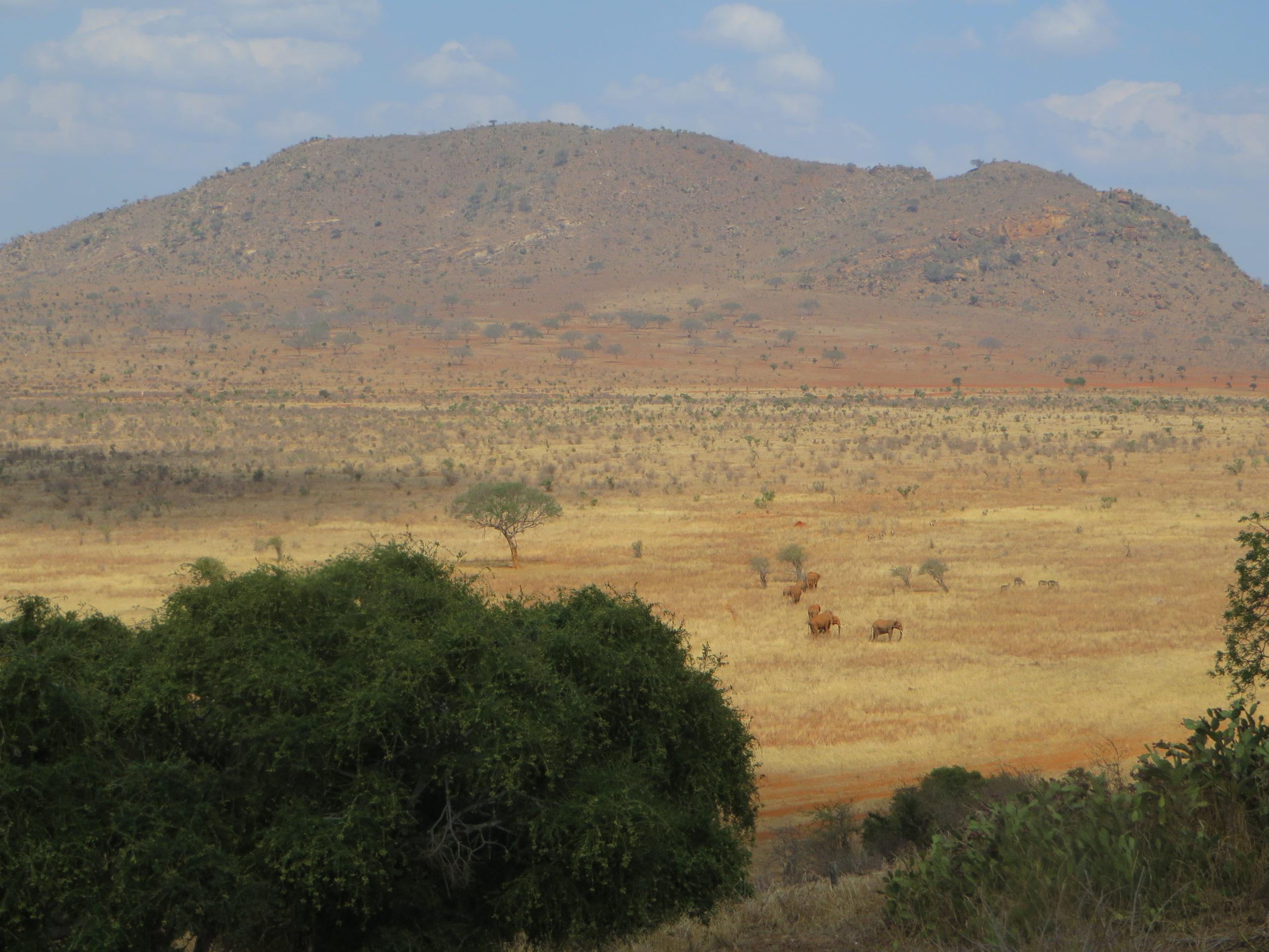 Tsavo East - View