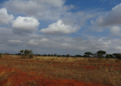 Tsavo East - View with ostriches