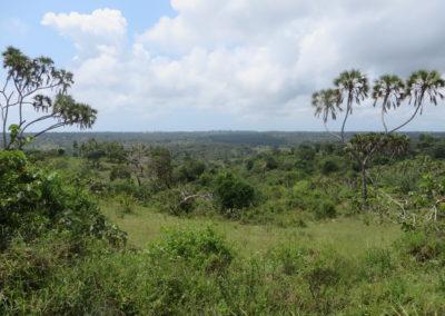Shimba Hills - View