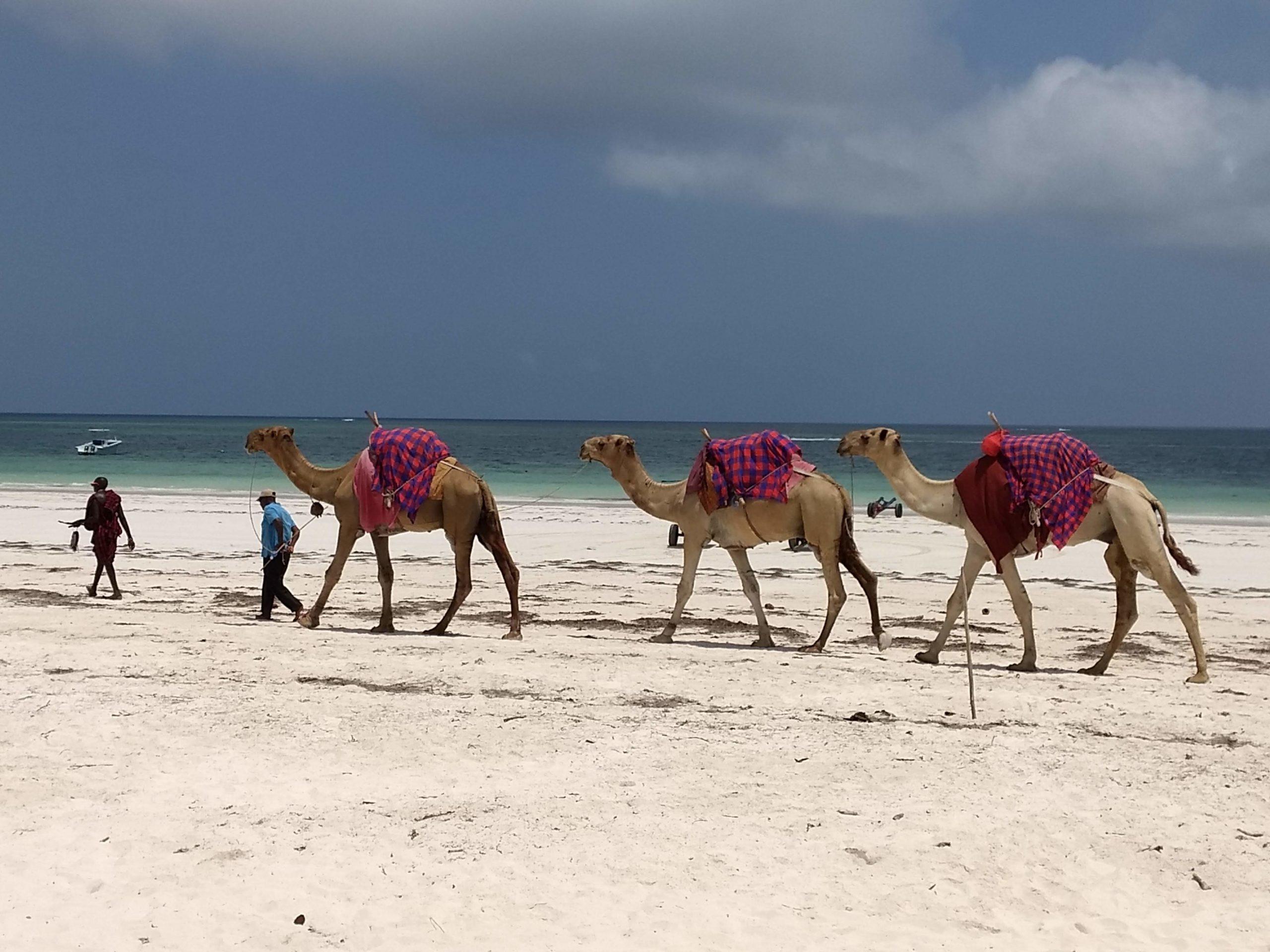 Diani Beach - Camel ride