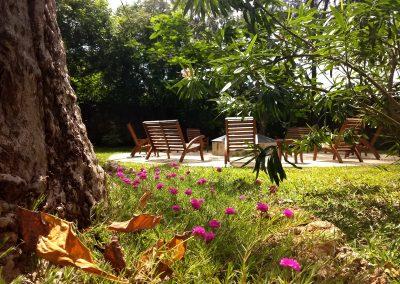 Zarafa House - Under the baobab