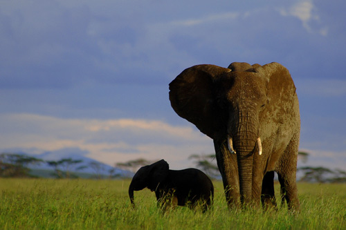 We Have Wide Selection of Tanzania Safari Tours