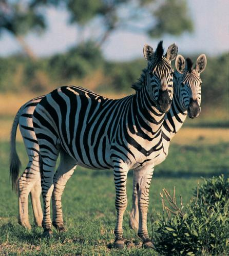 We Specialized in Wildlife Photography Safari Tours