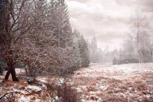 Årets vackraste vinterbild