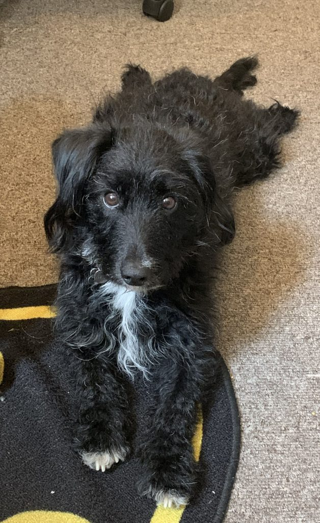 A picture of a black dog