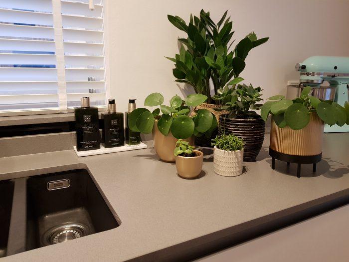 Alle plantjes een plantenbadje gehad. Planten verzorging.