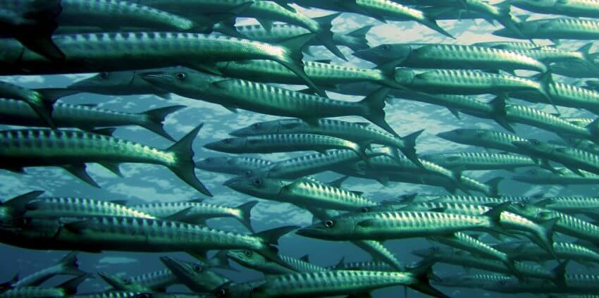 Fiskar i havet