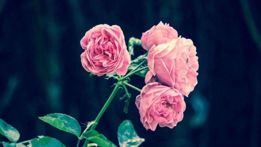 Rosa eller gröna fingrar?